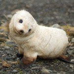 Cutest seal ever