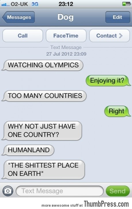 Dog Watching Olympics