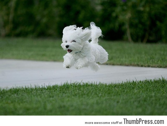 Hover puppy