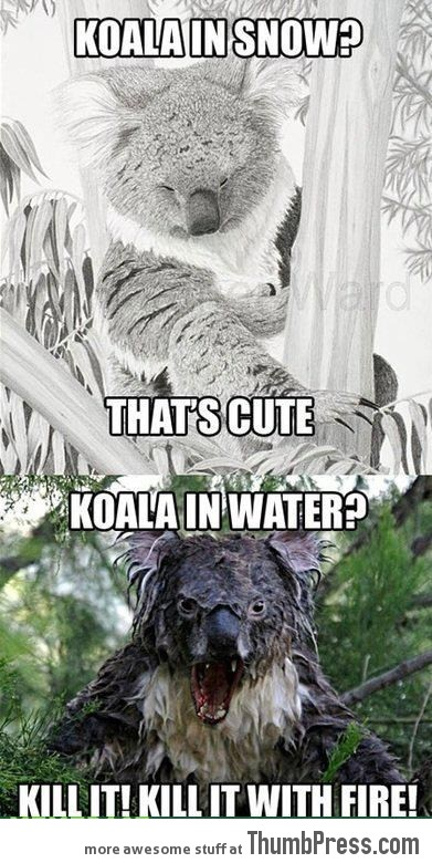 Koala in snow vs Koala in water