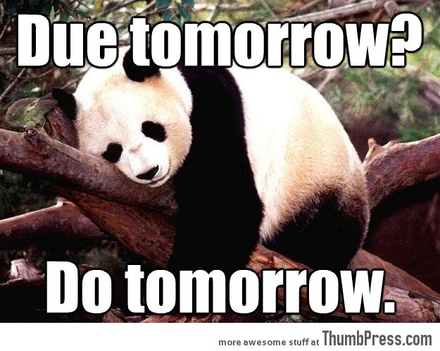 Procrastination Panda 21 Different Animal Memes: When Animals Unlock Level Awesome
