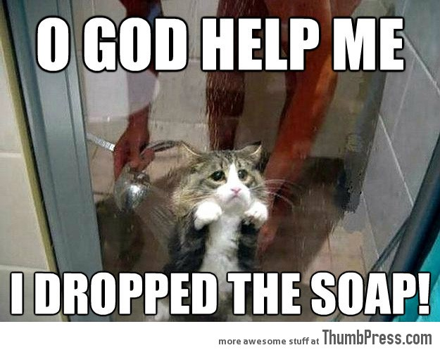 Shower kitty 21 Different Animal Memes: When Animals Unlock Level Awesome