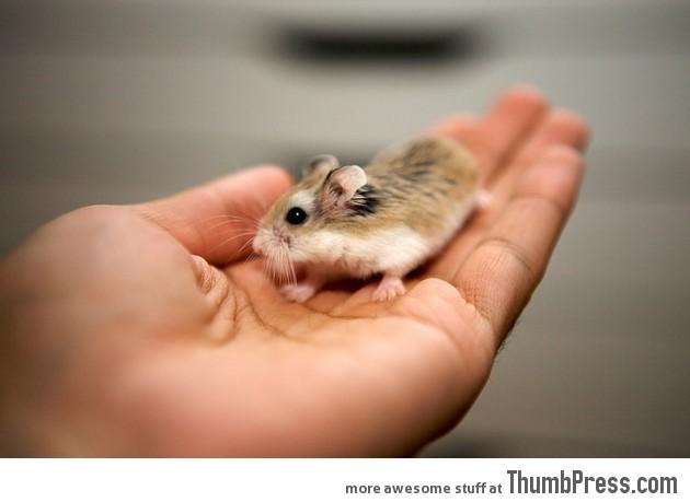 可爱动物能让你微笑(30图片)