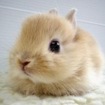 The cute bunny