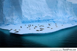A floating seal colony