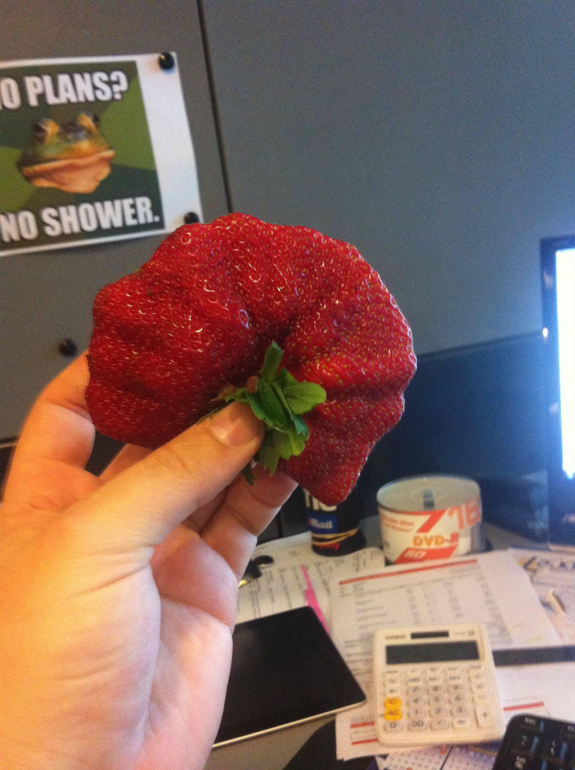Biggest Strawbery EVER