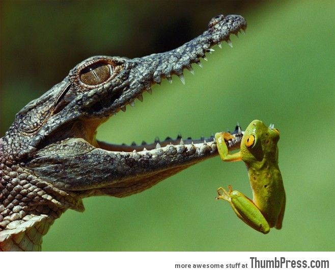 Crocodile and frog 658x533 20 Absolutely Amazing High Quality Images of Animals