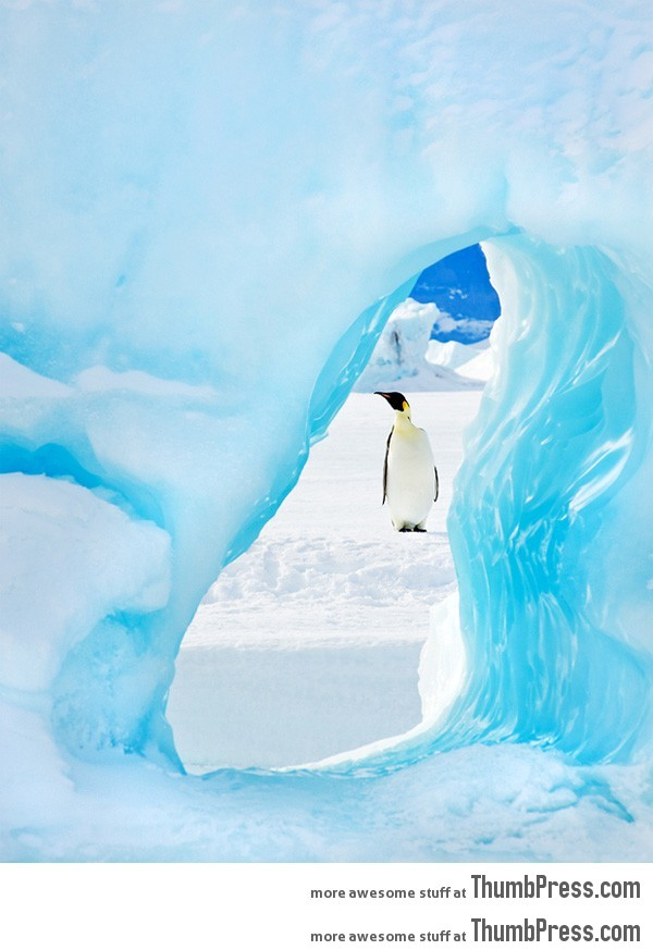 Emperor penguin framed by an iceberg in Antarctica. 20 Absolutely Amazing High Quality Images of Animals