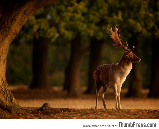 20 Absolutely Amazing High Quality Images of Animals