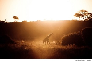 Sunset at Chobe National Reserve in Botswana