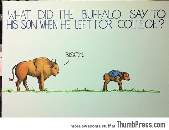 What did the buffalo say…