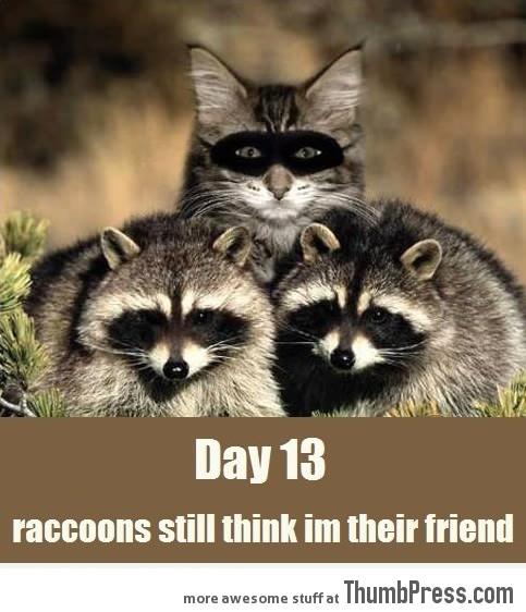Day 13, raccoons still think I'm their friend