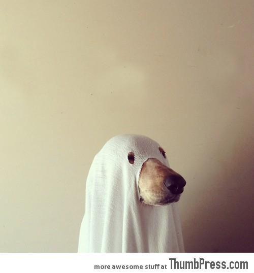 Halloween costume for your Doggy!