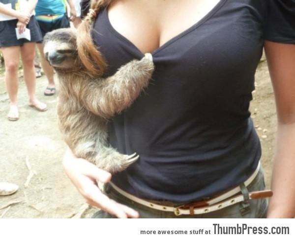 I want to be that sloth!