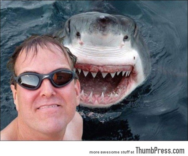 photobomb-level-shark..