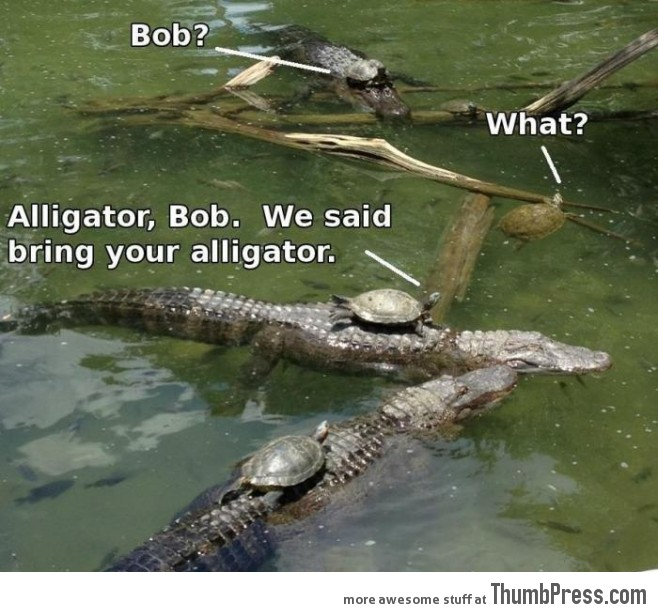 Bob, we told you to bring your own alligator