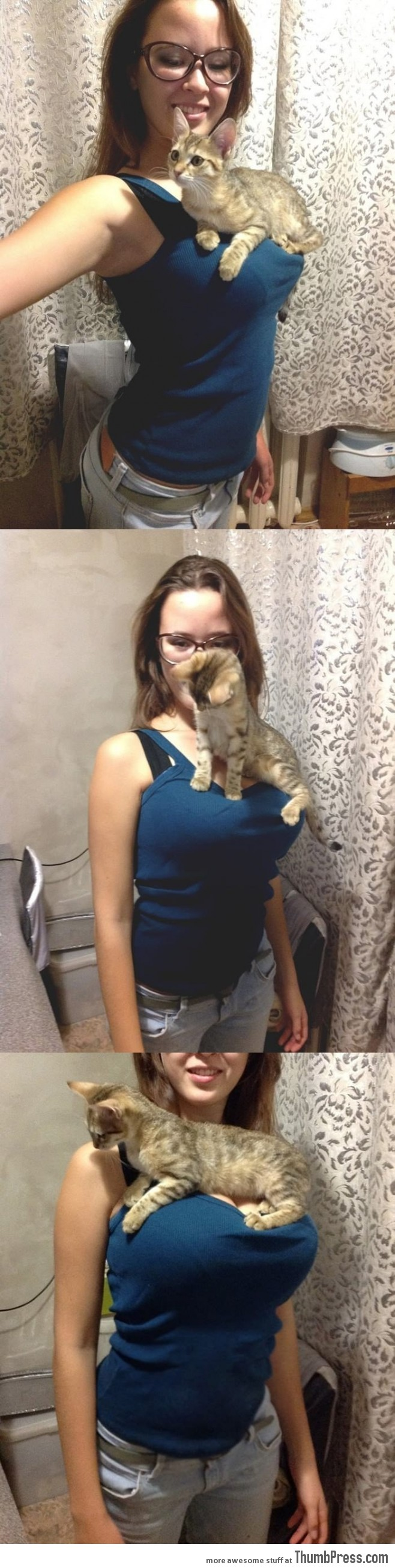 Cute cat resting on her owner's breast.