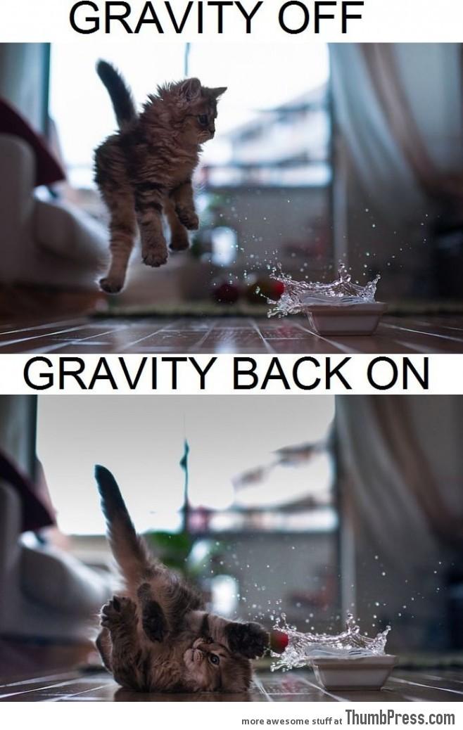 Gravity kitty