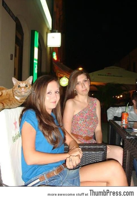 Best photobombing by a cat!
