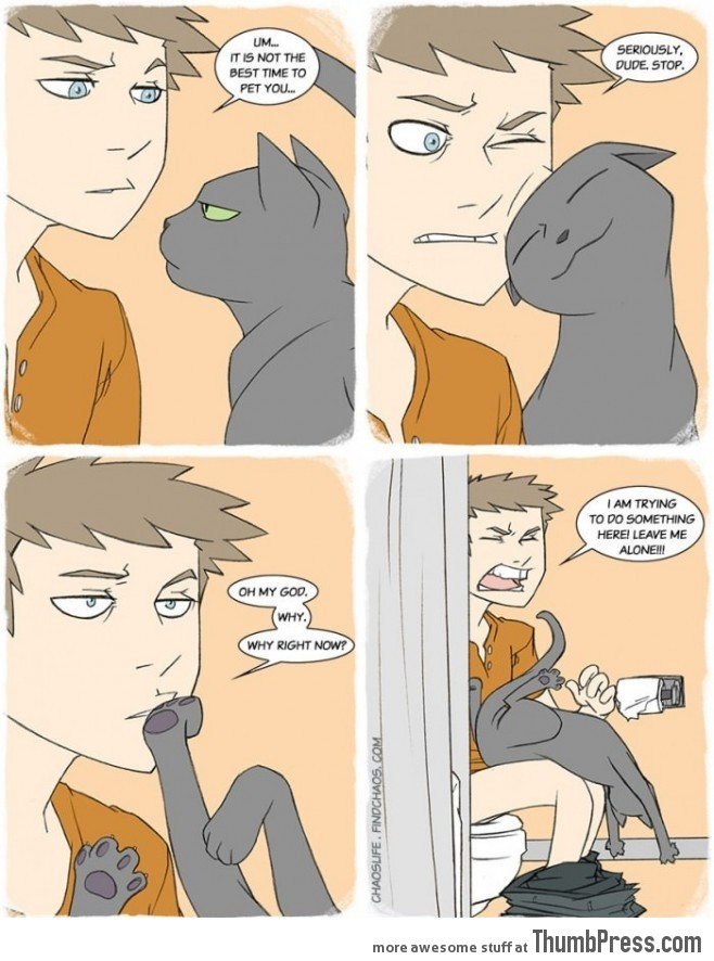Cats. They simply don't care.