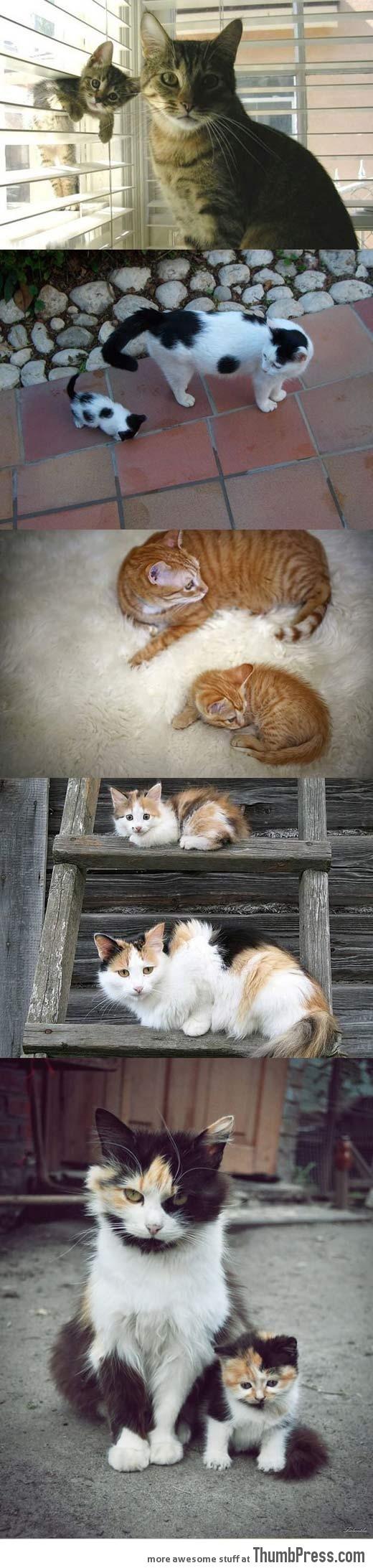 Like Parents, Like Kittens…