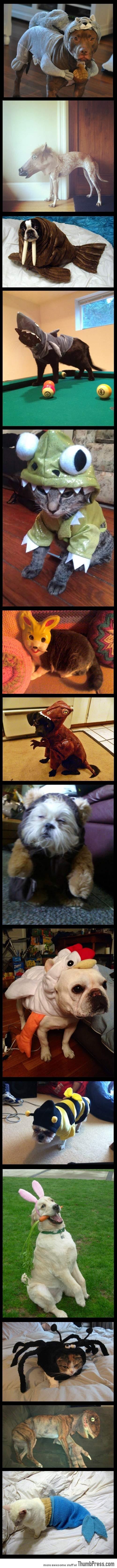 ANIMALS DRESSED UP AS ANIMALS.