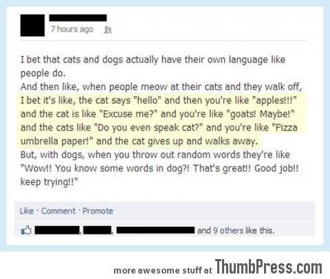 DO YOU EVEN SPEAK CAT?