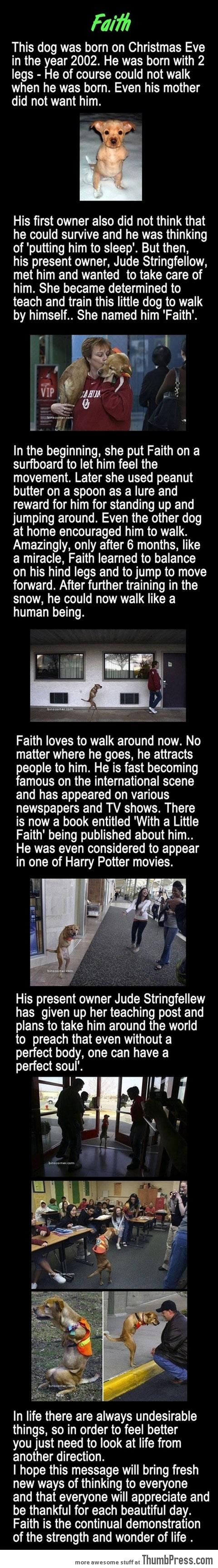 MEET FAITH - A HEART MELTING STORY