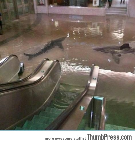 The collapse of a shark tank at The Scientific Center