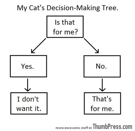 How My Cat Makes Decisions