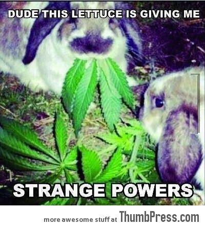 Lettuce powers