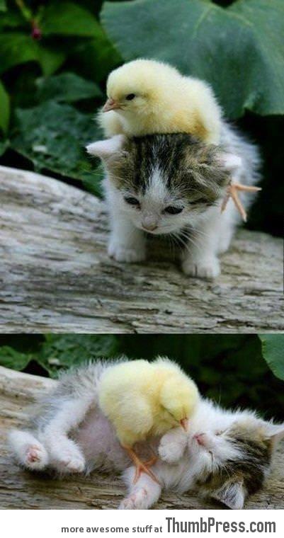 My sweet little friend