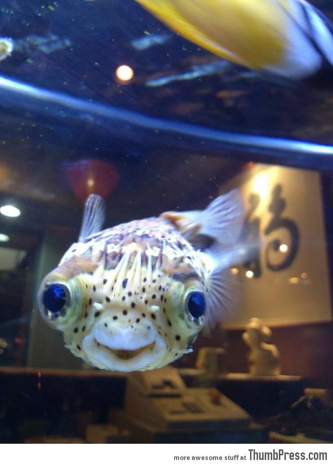 One really happy fish