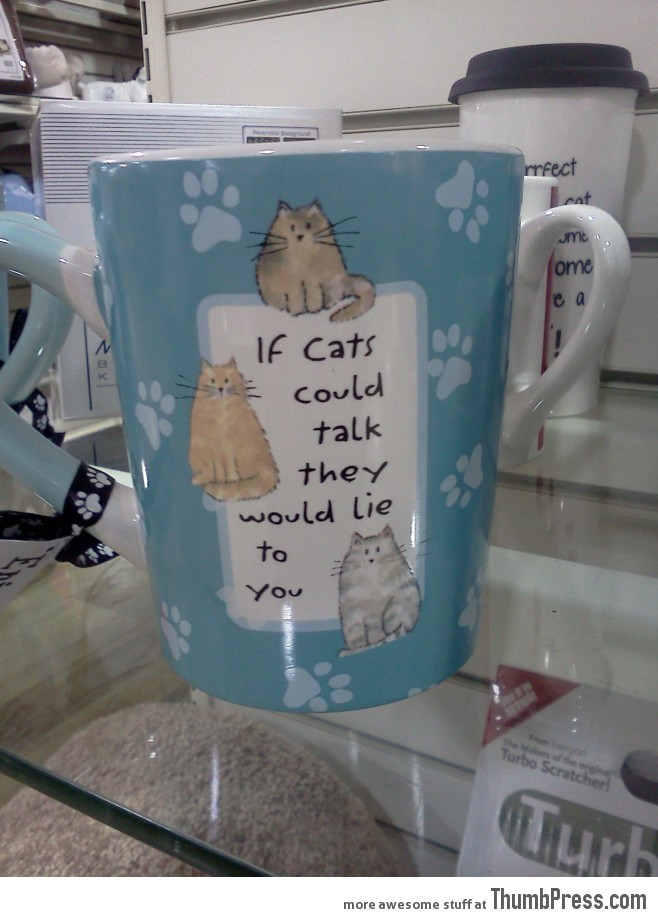 Untold truth about cats