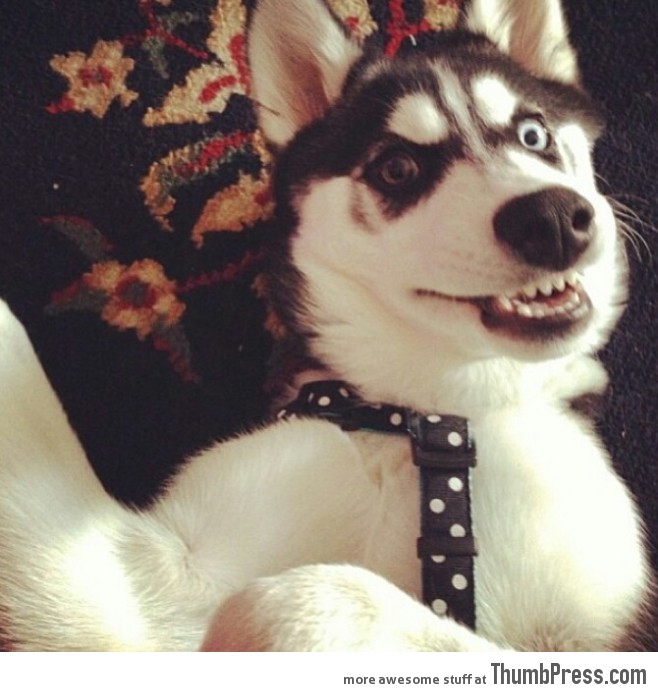 What happens when dogs try to take their own profile picture...