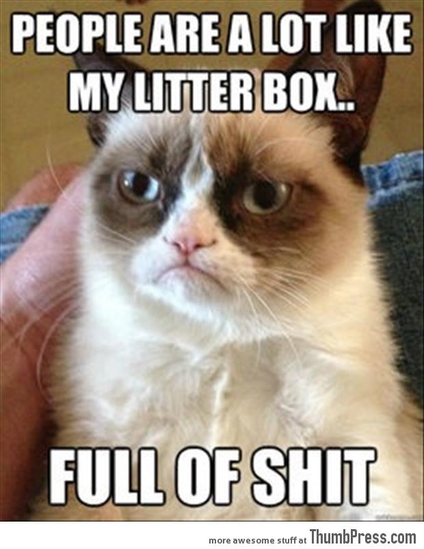 A lot like my litter box