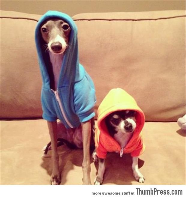 Boys in the hoodies