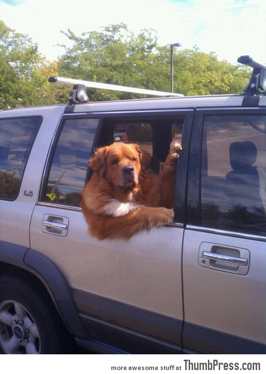 No time to explain, get in the car
