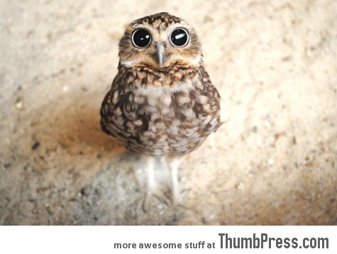 Owls are just so damn cute.