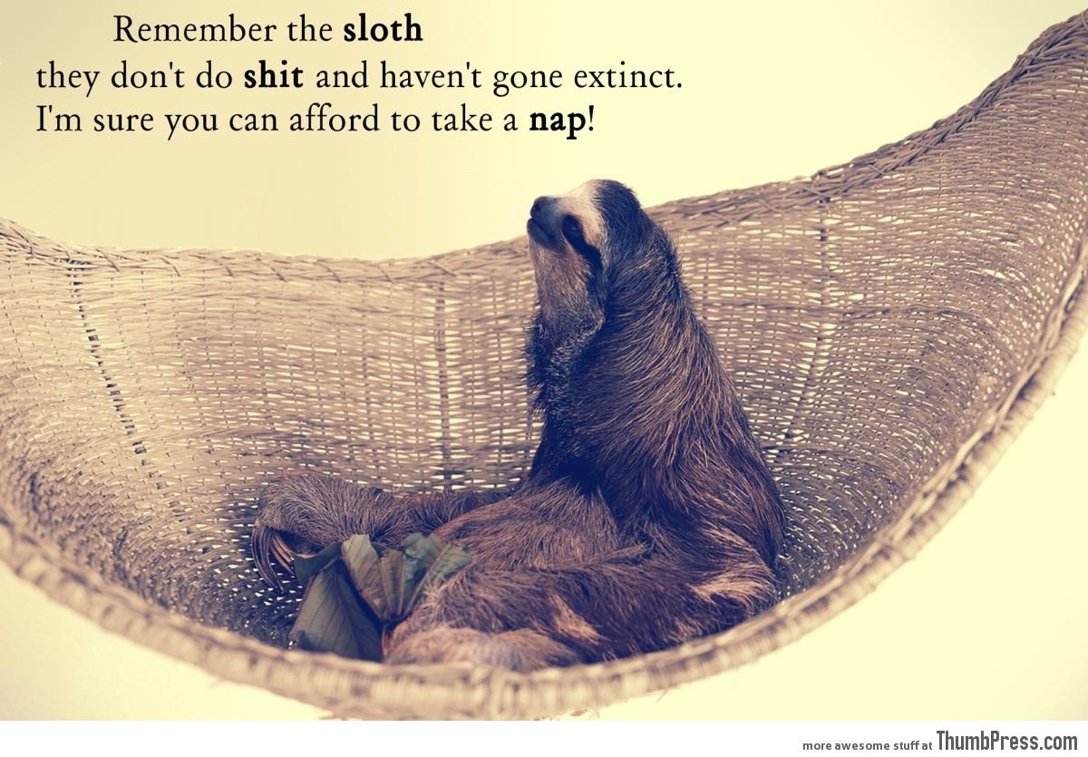 Sloth-life.jpg?0268a4