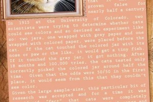 10 AMAZING CAT FACTS.