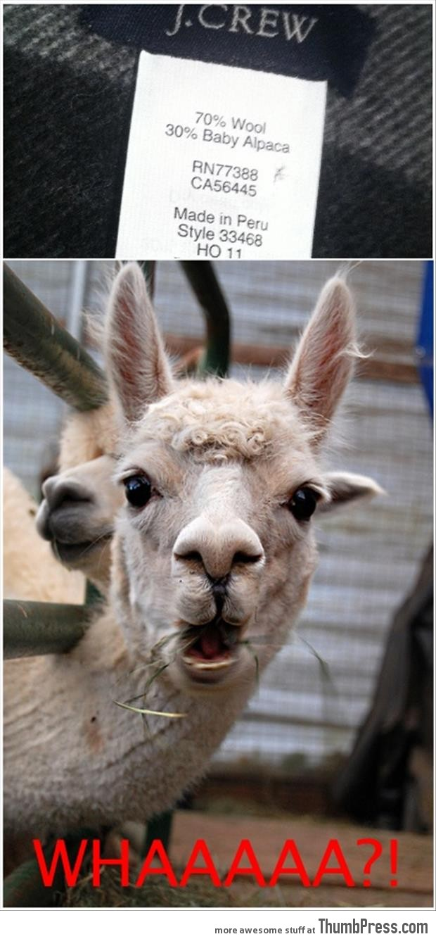 30 percent baby alpaca
