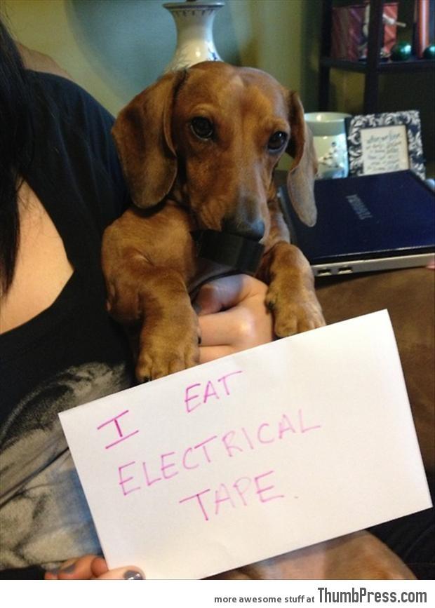 Bad dog notes 15