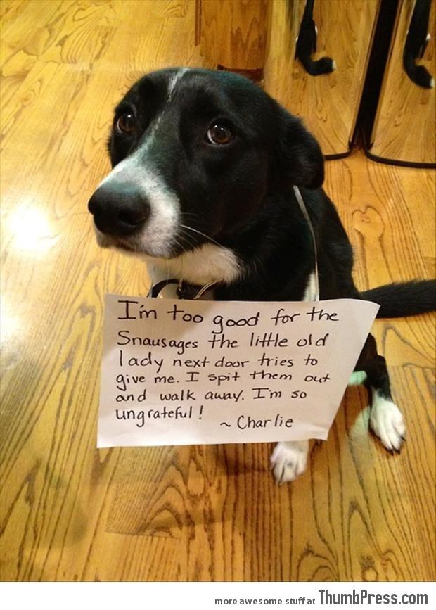Bad dog notes 24