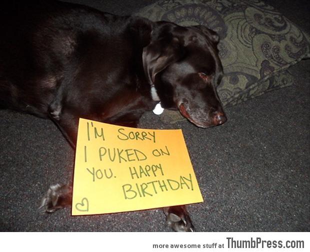 Bad dog notes 50