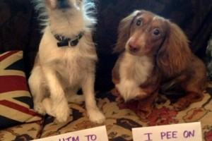 Best of dog shaming 1