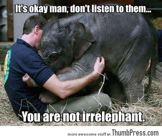 COMFORTING A BABY ELEPHANT.