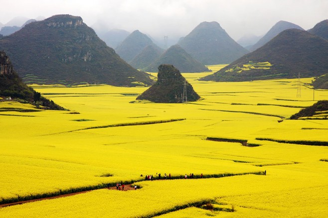 Canola Flower Field, China