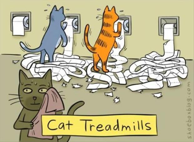 Cat treadmills