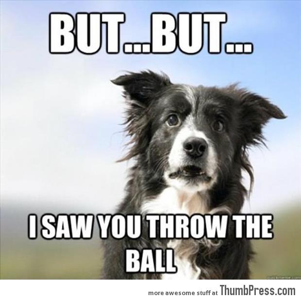 Confused dog plays fetch